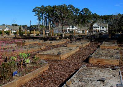 Community Garden in Forestbrook Estates Myrtle Beach SC